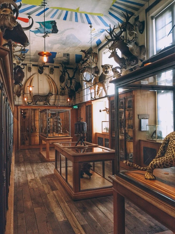Musee de la Chasse et de la Nature (Museum of hunting and nature) Paris