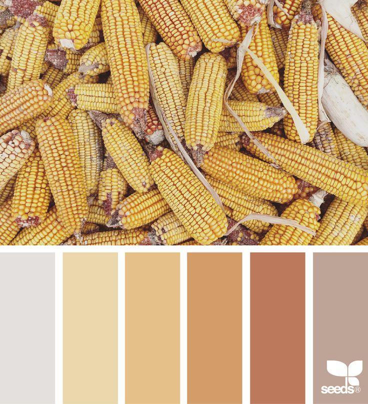 { color harvest } image via: @suertj