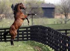 Big Brown (foaled April 10, 2005 in Kentucky) is a retired champion American Thoroughbred racehorse and winner of the 2008 Kentucky Derby and Preakness Stakes. He won his first five race starts.