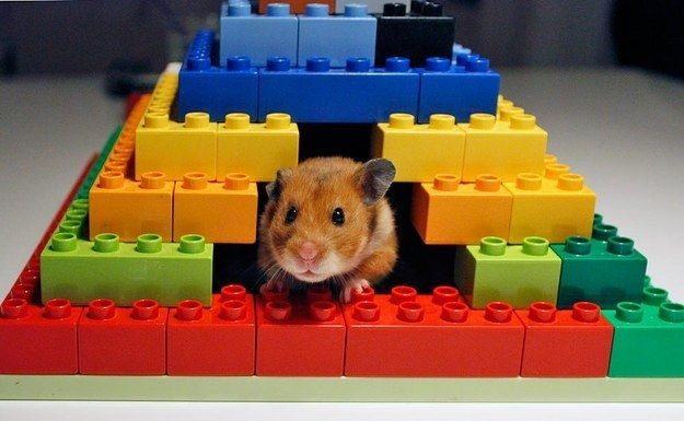 You can also keep your hamster happy by building him this adorable shelter. | 21 Ways To Upcycle Your Lego