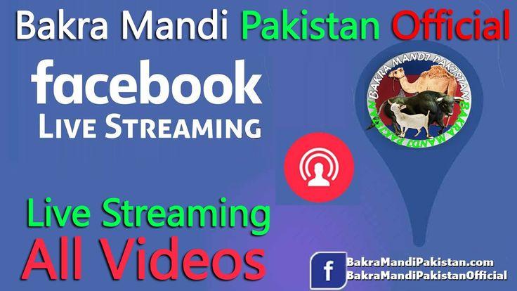 Cow Mandi || Qurbani Eid || Qurbani Eid 2016 || Cow Mandi 2016 || Live Streaming