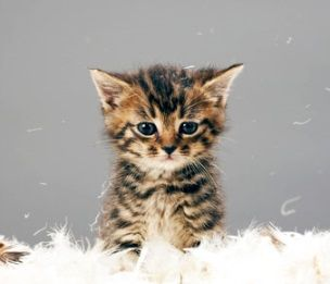 A really tiny little cute kitten. Click here and surprise a friend with this e-card! https://www.foe.co.uk/living/cards