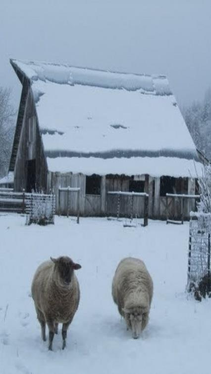 ....WINTER.... on the farm. reminds me of my barn and sheep that I grew up with