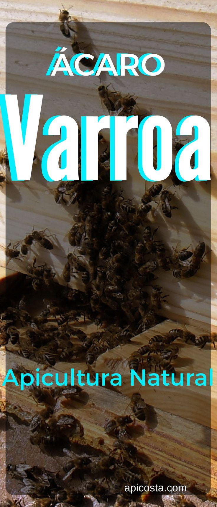 O resultado é abelhas com as asas deformadas, fracas, e muito provavelmente a vida útil da colmeia fica reduzida significativamente, podendo levar à morte. http://apicosta.com/acaro-da-varroa-tratamentos-possiveis-na-apicultura-natural/