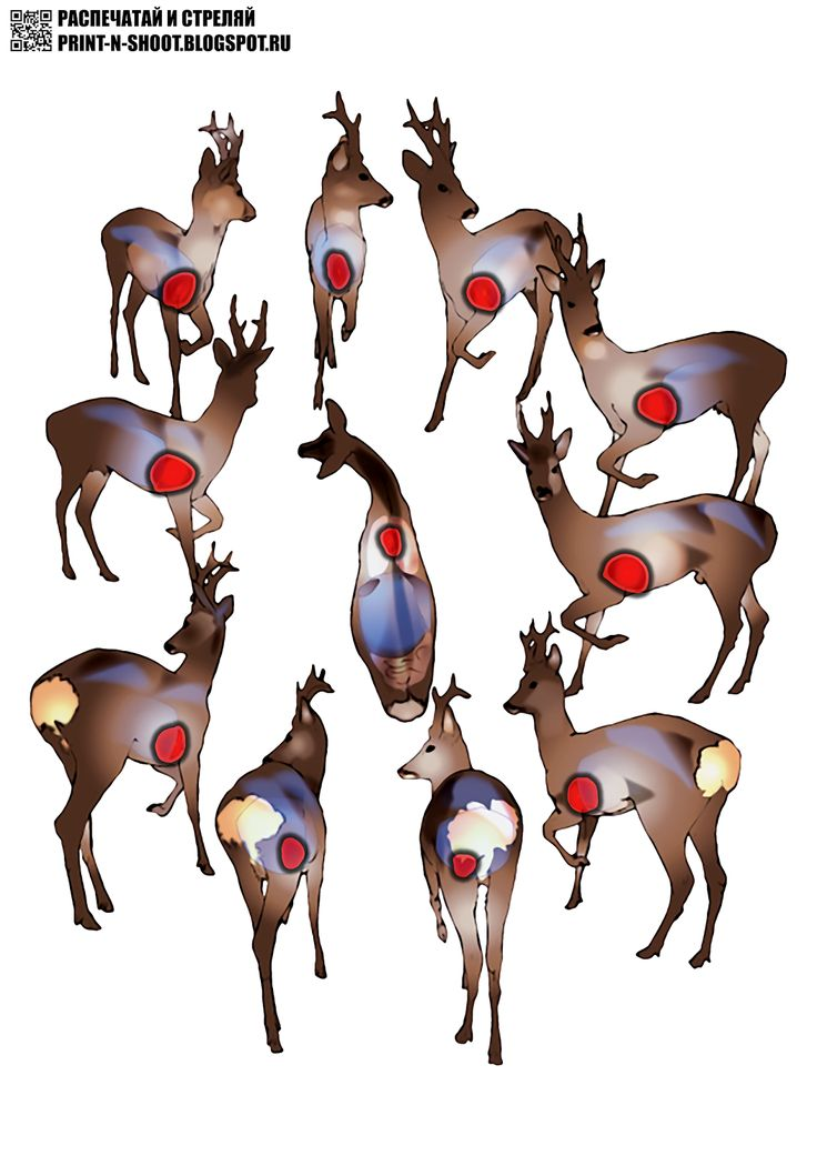 Deer from different sides.