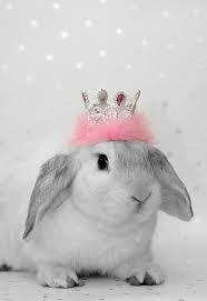 cuteEaster, The Queens, Lop Rabbit, Pets, Princesses Bunnies, Bunnies Princesses, Pink, Bunnies Rabbit, Animal Wear Crowns