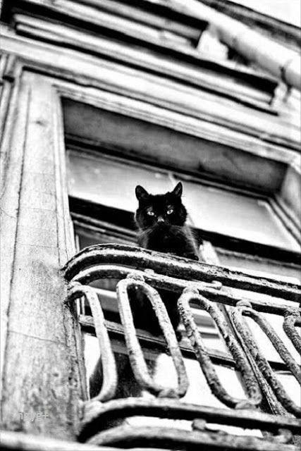 Mondások: Jó macskák - Amikor a jó macskák meghalnak, Párizsba mennek... - Oscar Wilde után Németh György