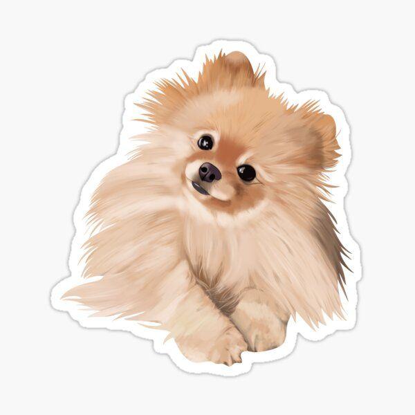 Pomeranian Peeking Dog Car Decal Vinyl Sticker Pom Dog