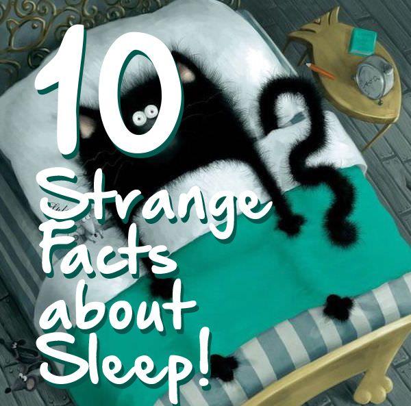#Facts #Sleep #NappingDay #omg #cute