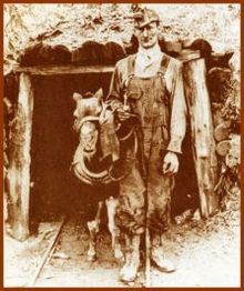 Shetland pony - Wikipedia, the free encyclopedia