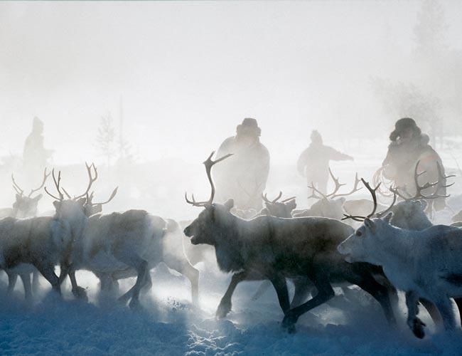 Reindeer Safari in Lapland, Finland.
