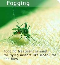 Mosquito Insecticides Control  Bangalore