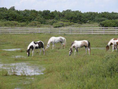 Chincoteague Ponies Farm North End Chincoteague Island