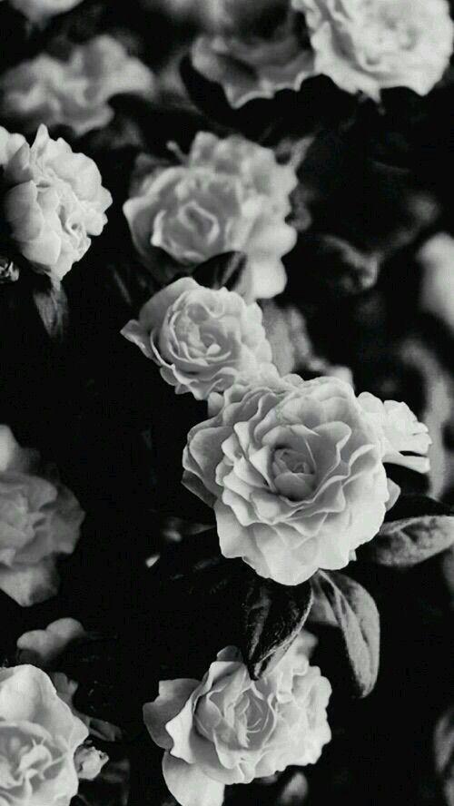 Pin De Isamar Mendez En Roses En 2019 Fondos De Pantalla Tumblr