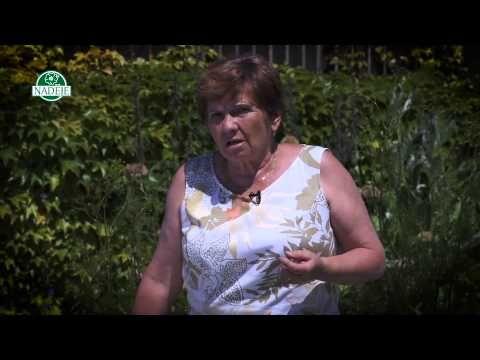 Bylinkářka Jarmila Podhorná radí - virózy a nachlazení - YouTube