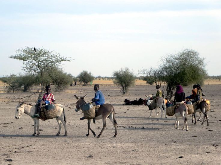 Donkeys are used for transportation by villagers in the Sahel region of Chad, Central Africa.