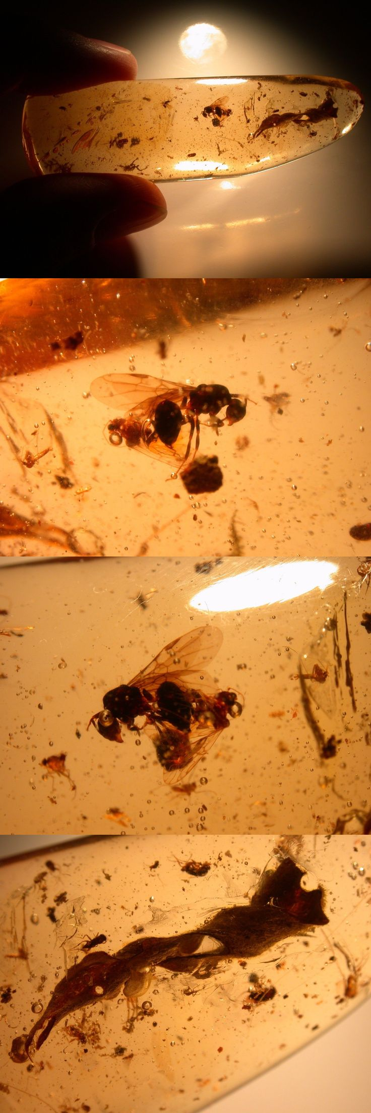 Amber 10191: Large Winged Ant, Long Curled Leaf, Spider, 11 Flies In Colombian Copal Amber -> BUY IT NOW ONLY: $35 on eBay!