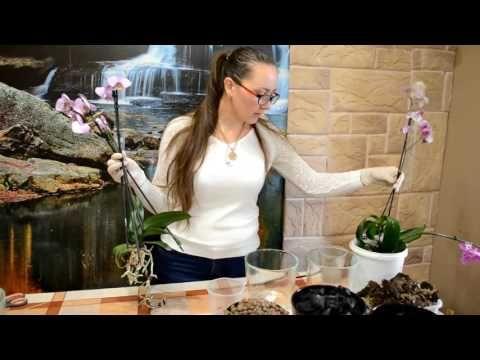 #1 Реанимация орхидей ( часть 2) Подготовка к посадке!(6,11,16)