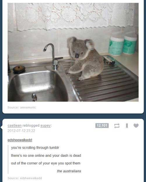 australians tumblr dashboard coincidences