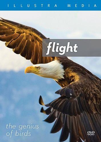 Tiaras - Homeschool - Birds Lesson Plan: FLIGHT: The Genius of Birds {Review & Giveaway}