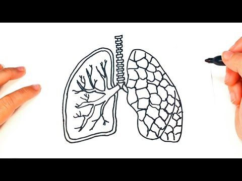 How to draw a Lungs | pair of Lungs Easy Draw Tutorial - YouTube