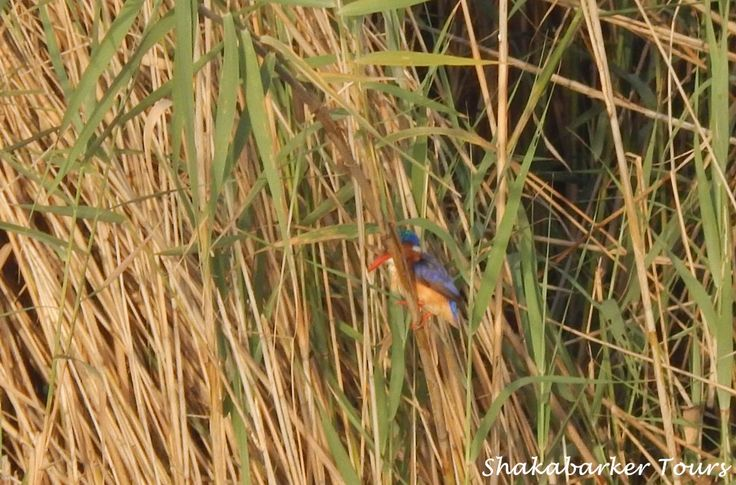 You never know what you will find amongst the reeds