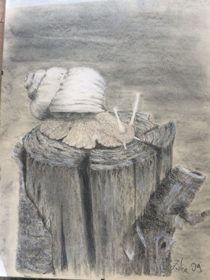 Kresba šneka tužkou a pastelem od Zuzky Dušánkové