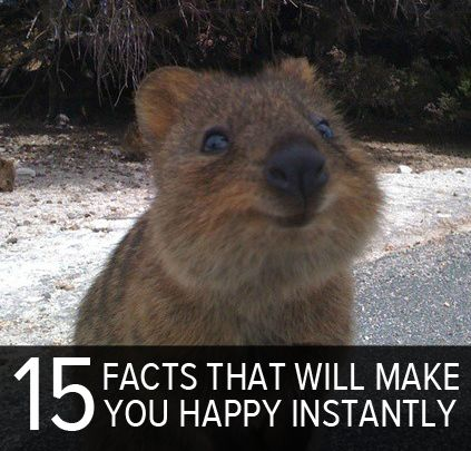 15 facts that are instant mood boosters - this did, I smiled right away - especially at this little critter!