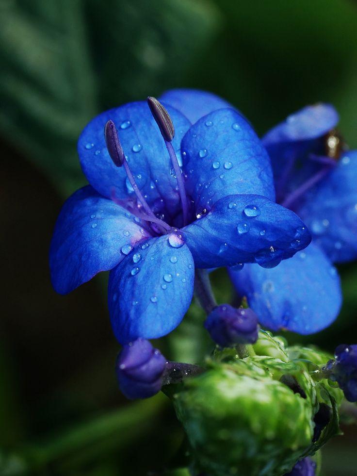 96 best unique flowers plants images on pinterest