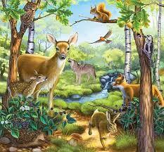 Картинки по запросу лесные животные рисунок