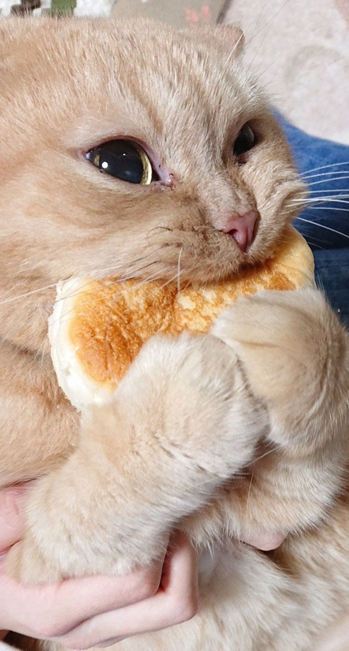 Tumblr User Explain Why Cats Are Obsessed With Eating Bread Cute Baby Animals Baby Animals Cute Animals