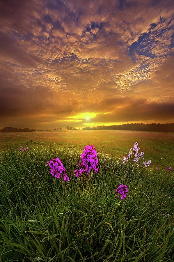 Neverwhere By Phil Koch In 2020 Landscape Photos Landscape Landscape Photography