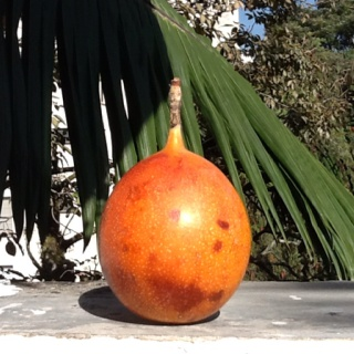 Granadilla from Medellin