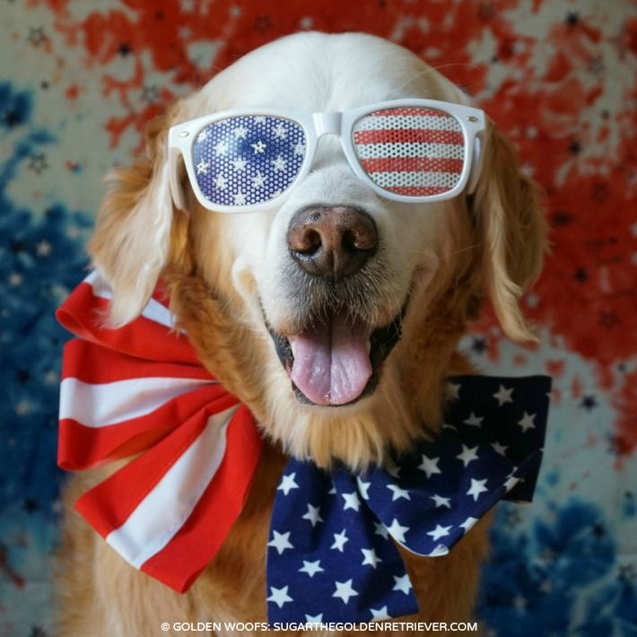 Patriotic Dog | Have a FUN Safe Fourth of July - Sugar The Golden ...
