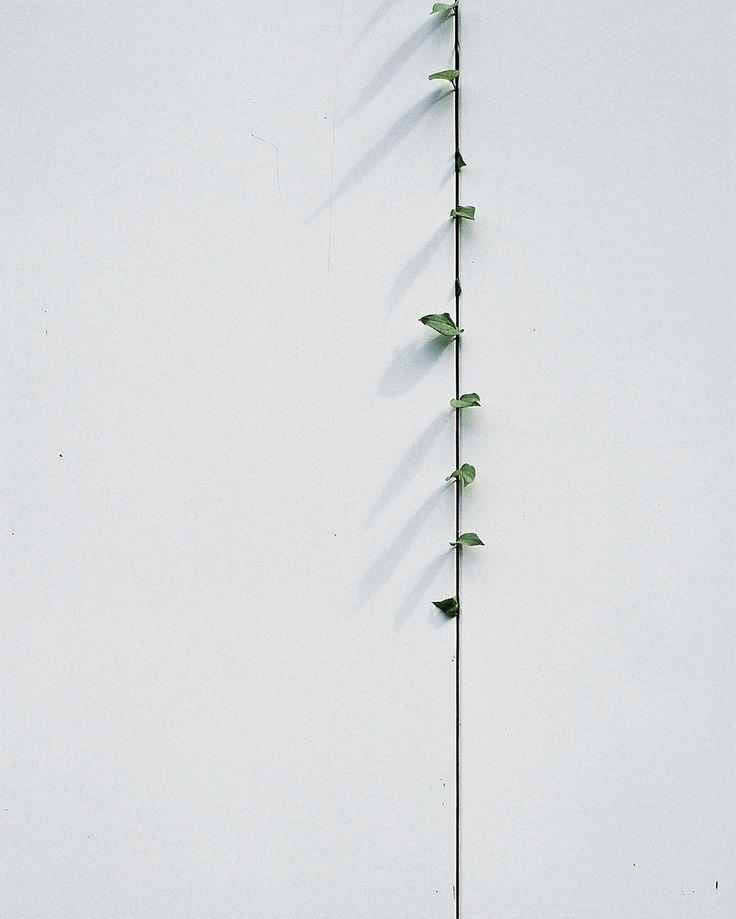 hiromitsu: Leaves by hisaya katagami on Flickr.