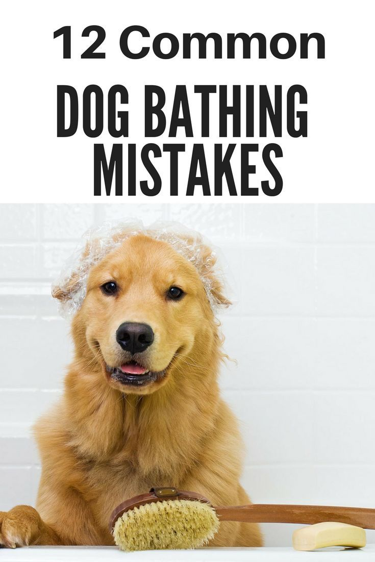 12 Common Dog Bathing Mistakes To Avoid Puppy Grooming At Home