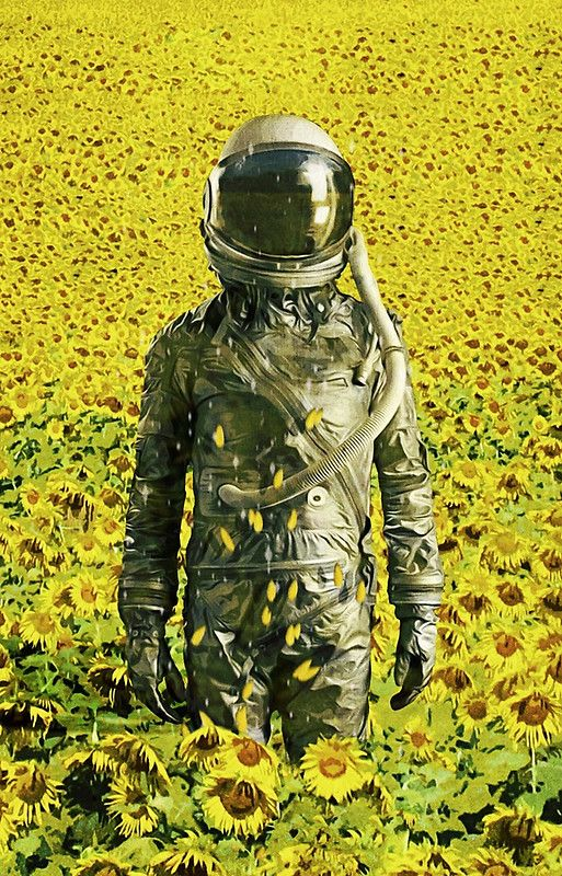 Stranded in the sunflower field