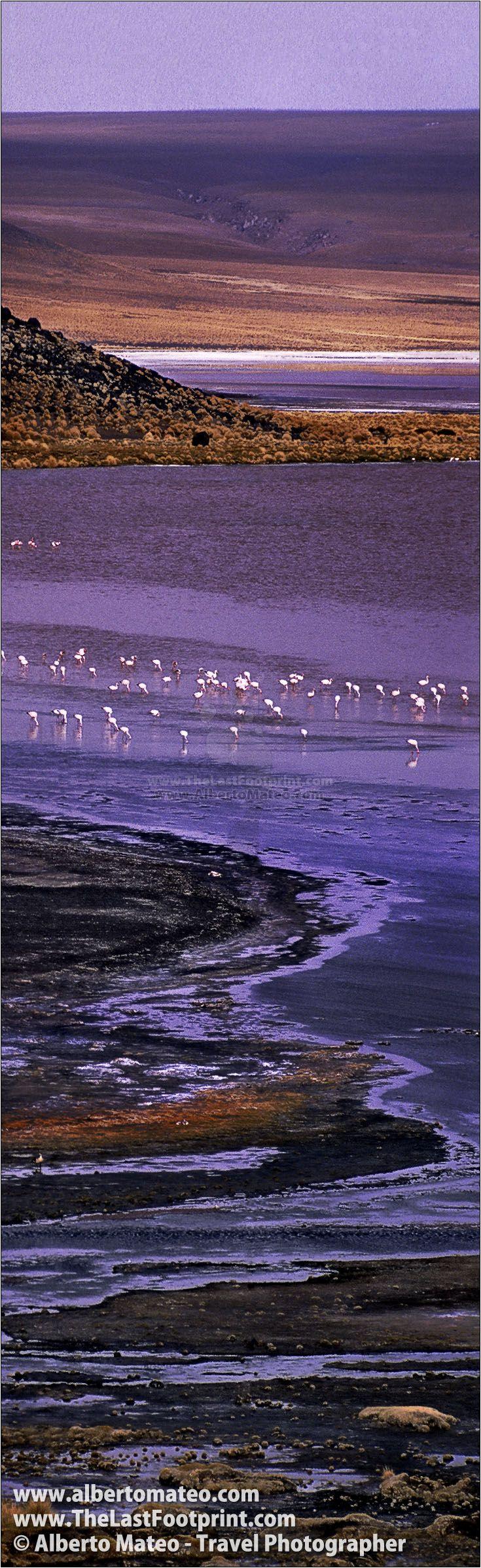 Flamingos in Laguna Colorada, near Uyuni, Altiplano, Bolivia. Landscape Photography by Alberto Mateo, Travel Photographer.