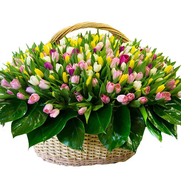 Тюльпаны разноцветные 251 шт. Букет из тюльпанов. (Голландия)