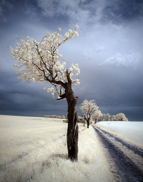 Infrared Photography,Poland, Lower Silesia,  http://www.facebook.com/Piotr.Krol.Photography