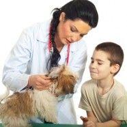 Qui n'a pas rêvé un jour d'être médecin vétérinaire? S'occuper de ces petites bêtes qui nous tiennent tant à cœur, quelle belle mission! Cependant, devenir médecin vétérinaire n'est pas chose facile. Avant de pouvoir s'occuper de vos animaux chaque médecin vétérinaire a passé aux moins 5 années de sa vie sur les bancs universitaires.