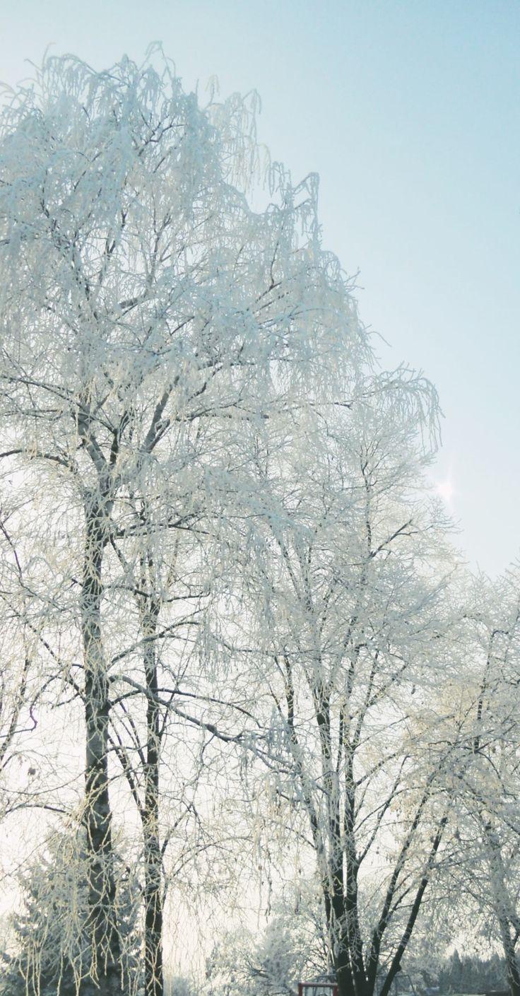 Frozen Photo: Beata Bauer