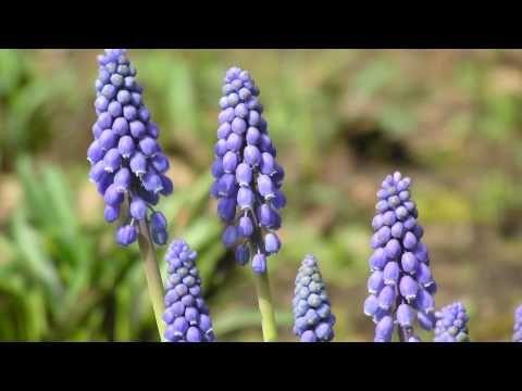 *▶ De Vier Jaargetijden - Lente - Lentefoto's met muziek van Vivaldi