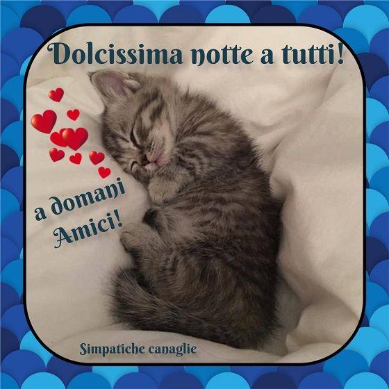 Dolcissima Notte Animali Sogni D Oro E Notte