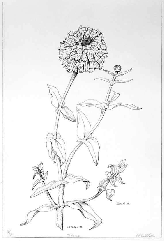 Line Drawing Natural Forms : Best images about natural forms plants etc on