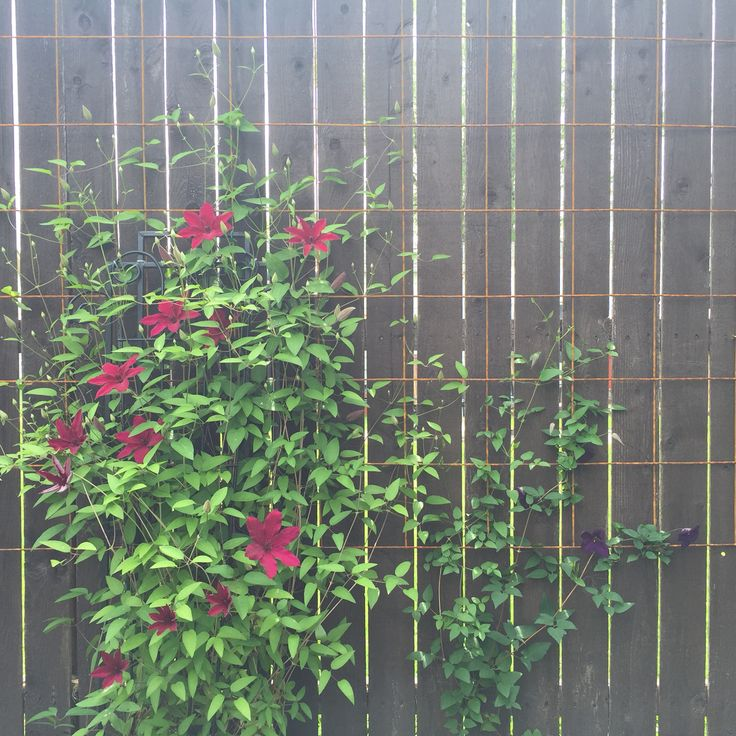 Concrete Wire Mesh Trellis On A Wooden Fence Is A Great