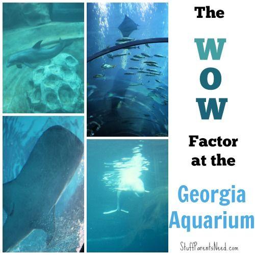 Atlanta 39 S Wow Factor For Kids The Georgia Aquarium For