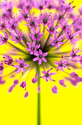 : Flowers Photography, Pink Flowers, The Colors Purple, Purple Flowers, Flowers Power, Colors Combinations, Beautiful Flowers, Andy Small, Bright Colors