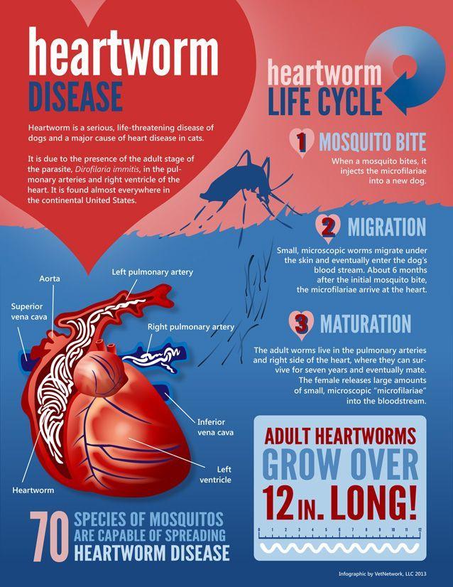 parasites heartworm treatment preventive medications work