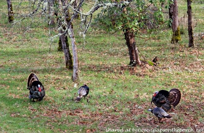Group Of Turkeys Are Called 8